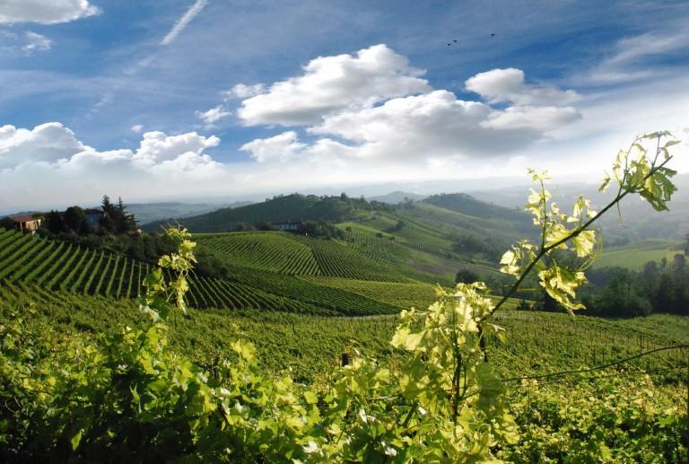 Piemonte di vino