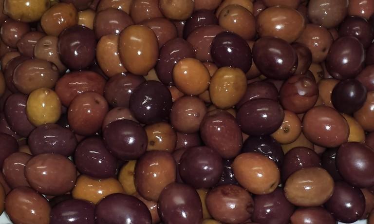 Le olive da mensa del Lazio