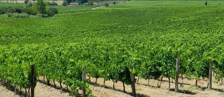 Nel Chianti convegno sull'agricoltura che verrà
