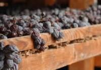 News dal mondo del vino