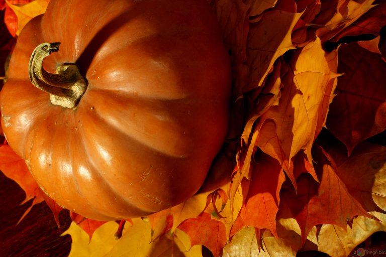 """Le """"Ricette di zucca"""" tra le ricette dell'autunno"""