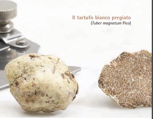 Ricette al tartufo: ricette profumate per menù importanti