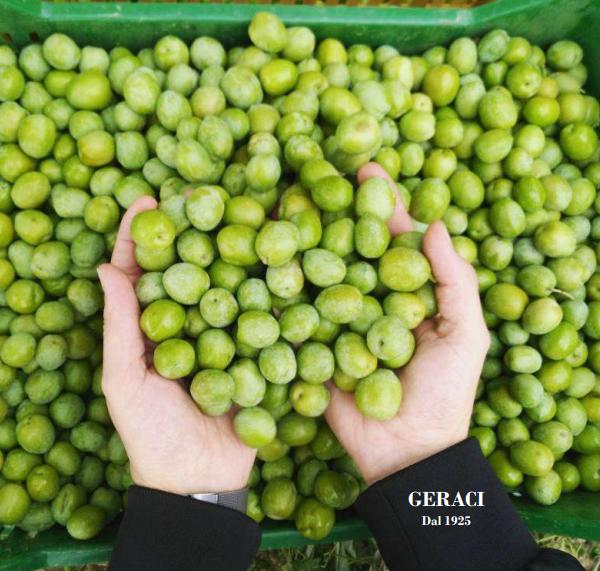 Azienda Geraci: olio pluripremiato e qualità siciliana