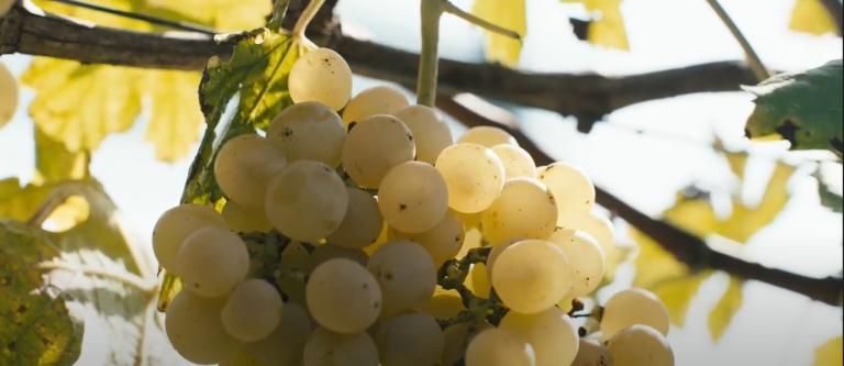 Qualità della vita, antico vitigno e wine resort: un format per la Borsa