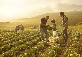 coltivatori sui campi